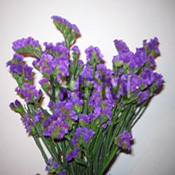 statice purple flower