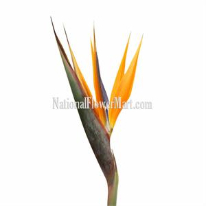 Birdofparadise Flowers on Flowers  Birds Of Paradise  Ginger Flowers  Bouquets  Tropical Flowers